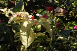 箱根『強羅公園』熱帯植物館